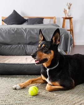 Милая собака на полу с мячом