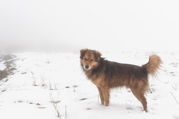 Милая собака на снегу