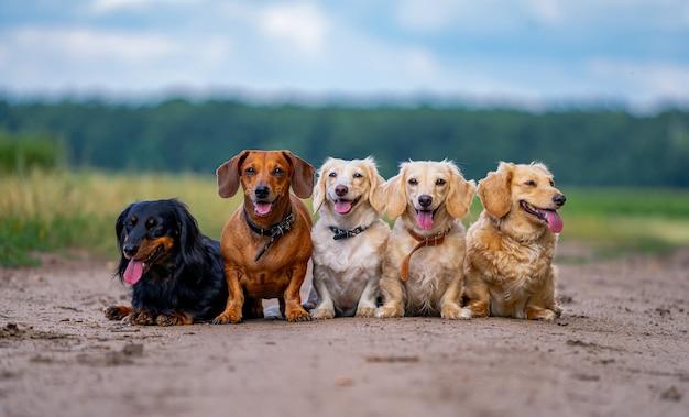 야외 포즈를 취하는 귀여운 강아지 애완 동물. 야외 개 품종. 가축.