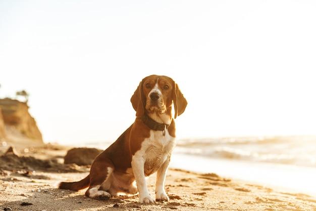 많은 물건을 가지고 노는 귀여운 강아지