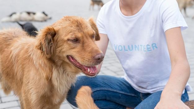 避難所で女性と遊ぶかわいい犬