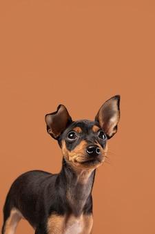 Ritratto di cane carino in uno studio