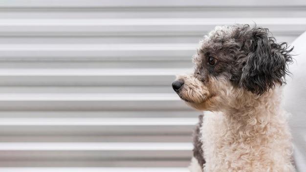 Cane carino in posa all'aperto