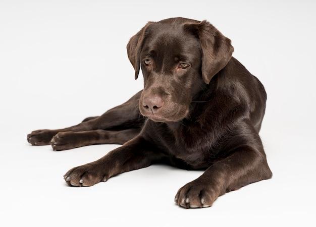 Cane carino in posa con sfondo bianco