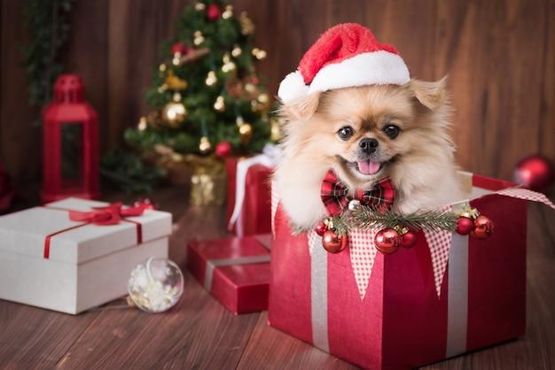 Симпатичные щенки померанского шпица в шляпе санта-клауса в подарочной коробке
