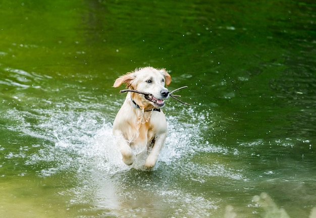 Cute dog running out of lake