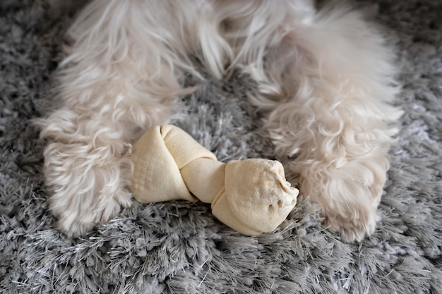 Cute dog's legs and toy
