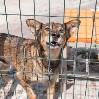Simpatico cane nel riparo dietro il recinto in attesa di essere adottato