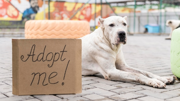 Simpatico cane al rifugio seduto accanto ad adottarmi segno