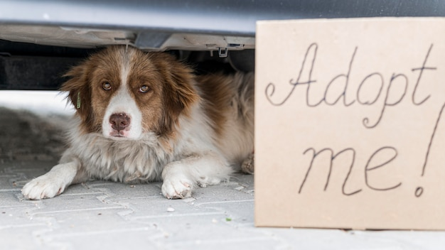 Cute dog sitting under car outdoors with adopt me sign
