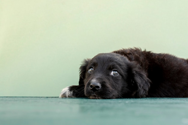 Cute dog sitting on floor on green background