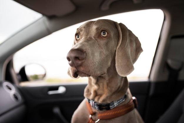 車に座っているかわいい犬