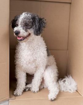 Милая собака сидит в картонной коробке
