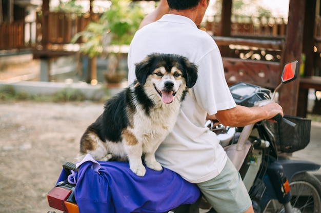 Cute dog sitting on the motorcycle