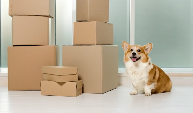 A cute dog sitting near the big boxes the relief of life by the help of new technologies with online shopping