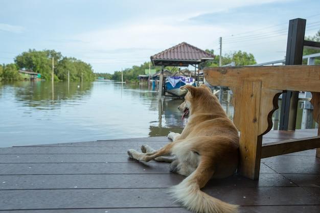 Cute dog sitting near river.