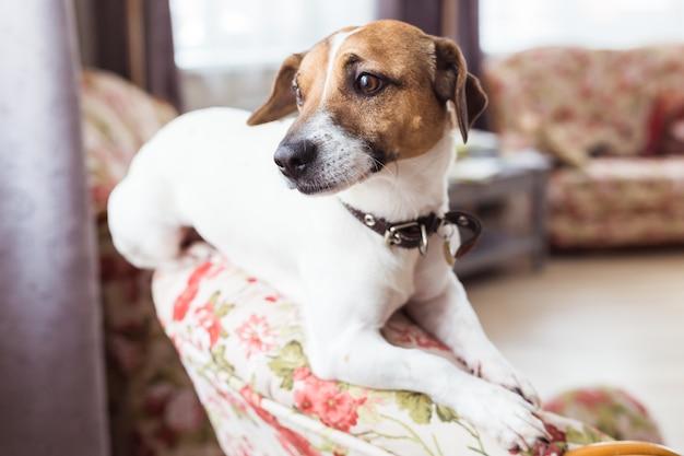肘掛け椅子に座っているかわいい犬