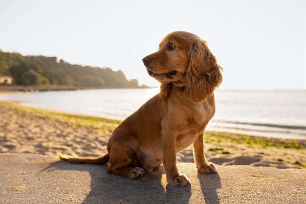 야외에 앉아 귀여운 강아지