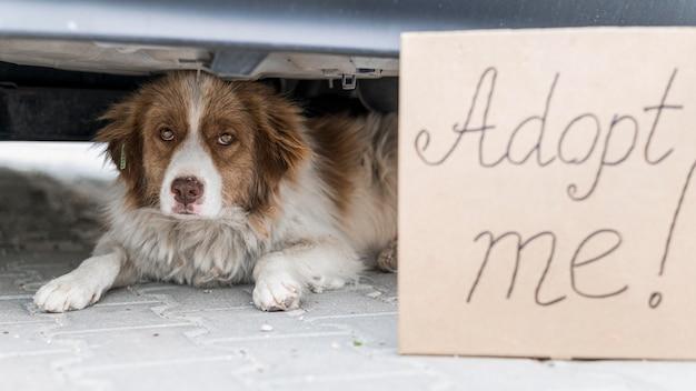 Милая собака сидит под автомобилем на открытом воздухе со знаком усыновить меня