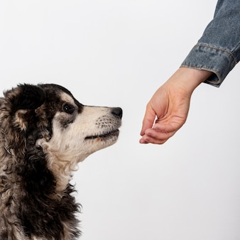 Cute dog sniffing owner hand