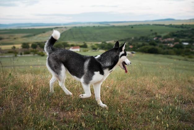 自然の中で時間を過ごすかわいい犬