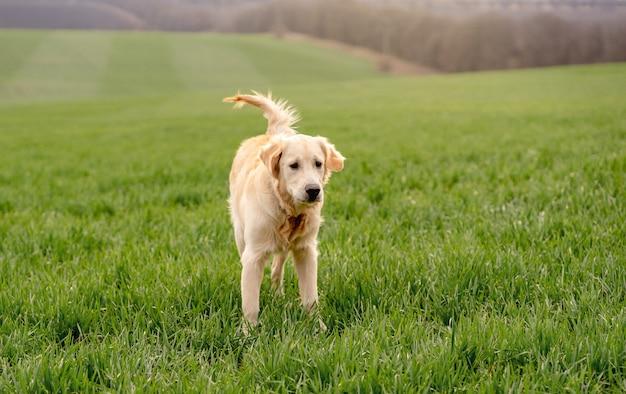 Cute dog standing on green field