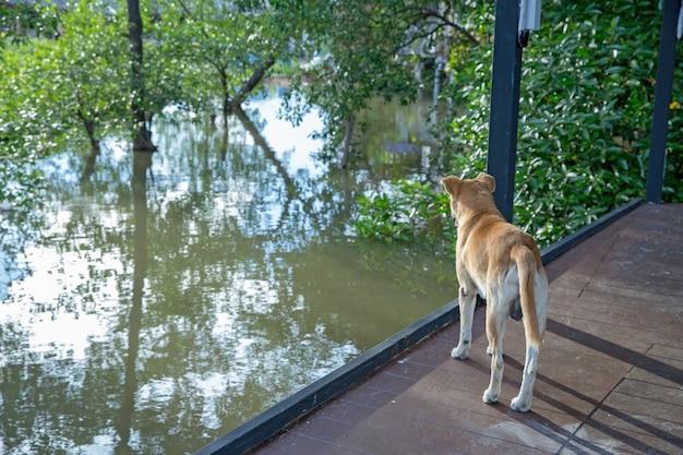 Cute dog standing near river.
