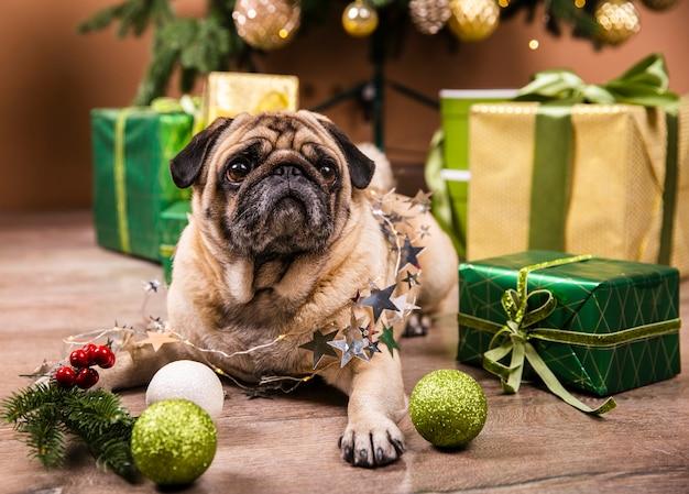 Милая собака стоит на полу, наблюдая за подарками
