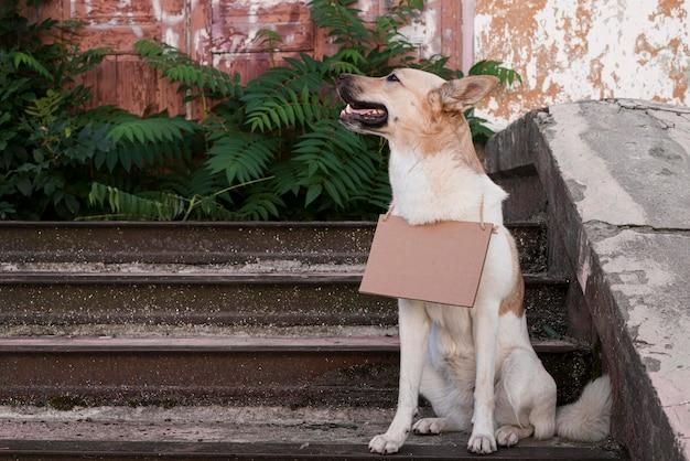 Милая собака, стоя на лестнице с баннером