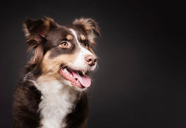 Милая собака стоя с копией пространства