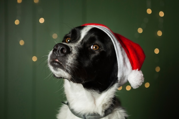 Cute dog wearing santa's red hat