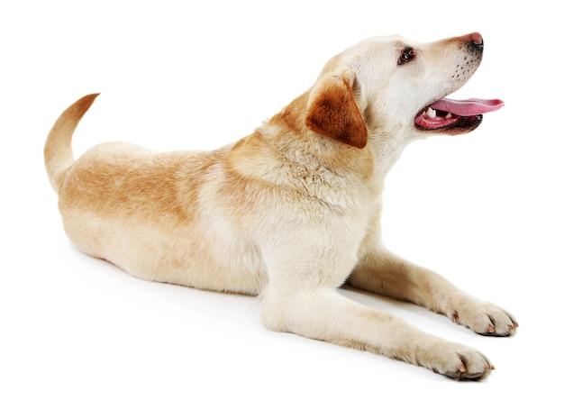 Cute dog on white