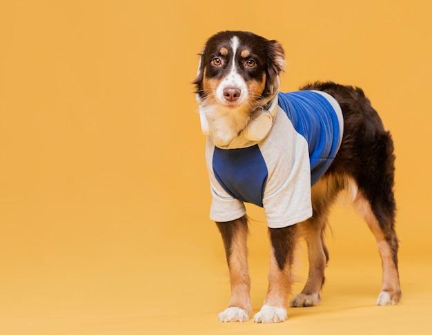 Милая собака с костюмом