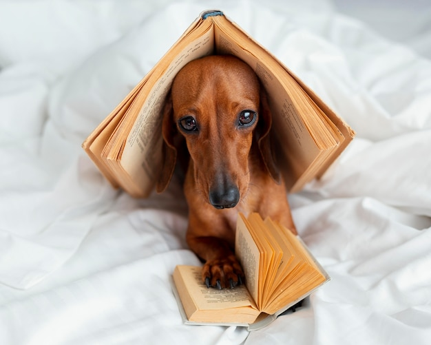 Cute dog with books in bed