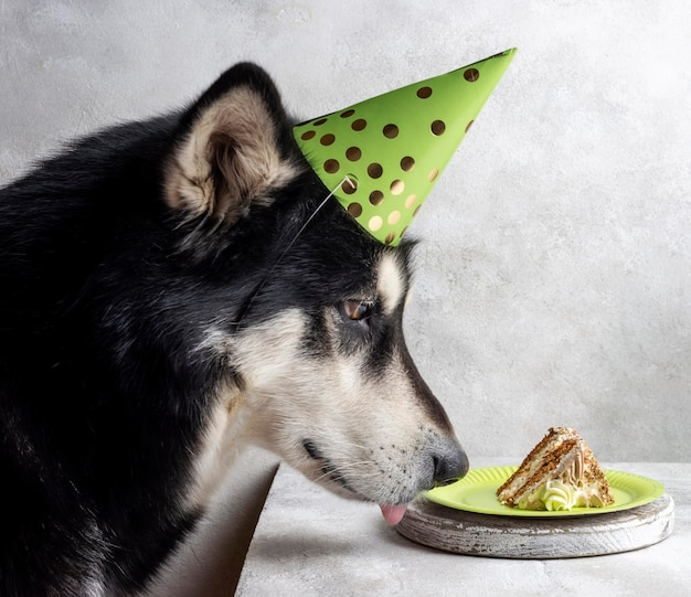 Cute dog with cake piece