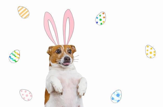 Милая собака с мультяшными кроличьими ушками в окружении крашеных яиц на белом фоне