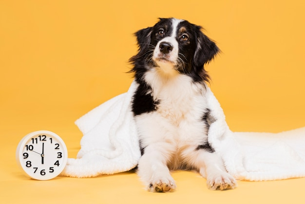 Cute dog with a clock