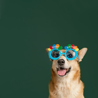 Милая собака в очках и зеленом фоне