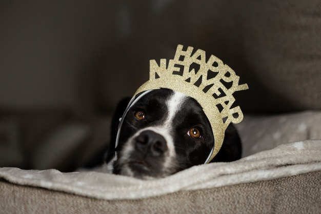 Cute dog with happy new year crown