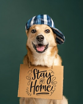 Cute dog with hat holding banner