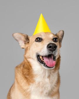 Милая собака в шляпе улыбается