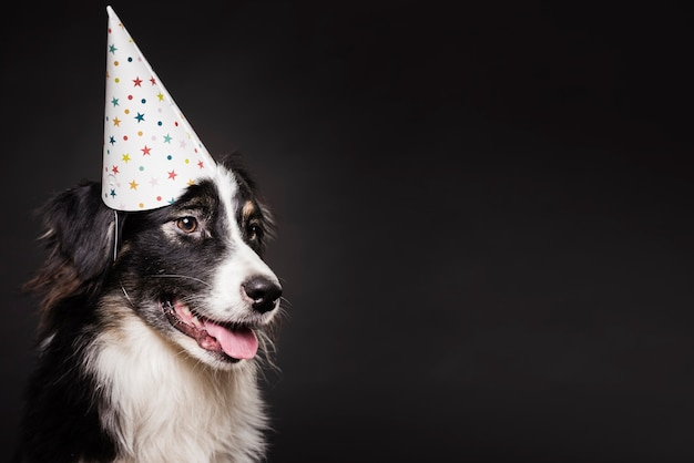 Cute dog with a hat