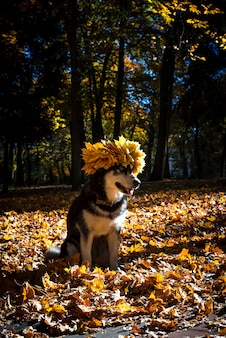 Cute dog with leaves in autumn park