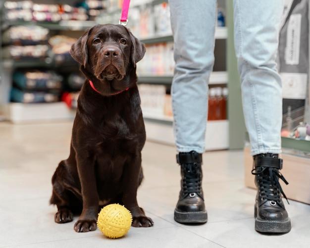 Милая собака с владельцем в зоомагазине