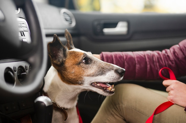 Cute dog with owner in car