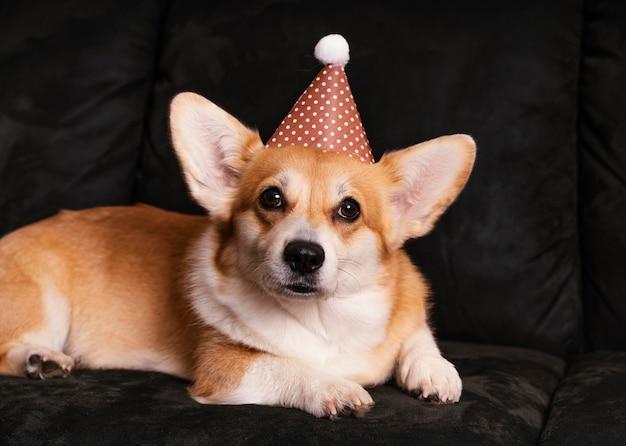 ソファにパーティーハットとかわいい犬