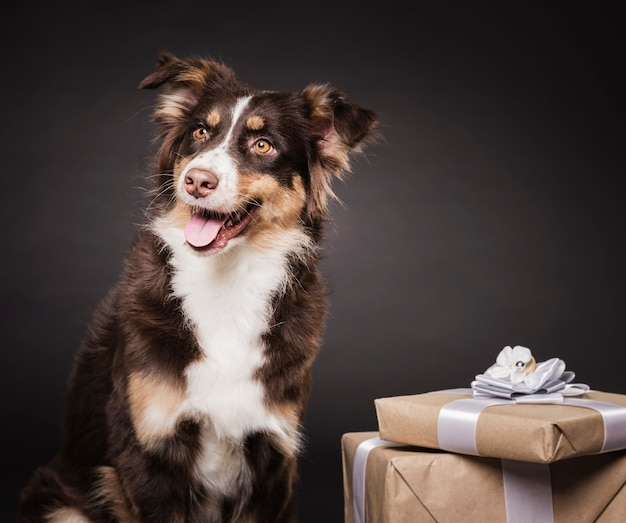 Cute dog with presents