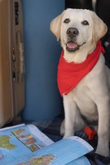 Милая собака с красной банданой и картой