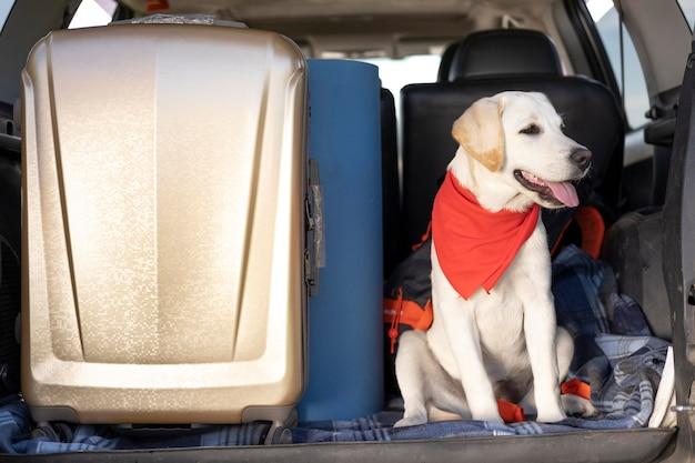Милая собака с красной банданой сидит в машине
