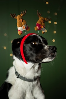 Cute dog with red crown with reindeers
